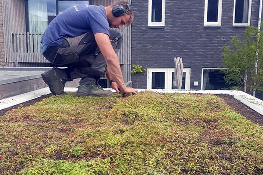 Aanleg van een groen dak met sedum